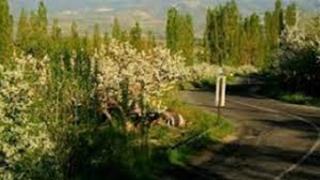Gine Yeşillendi Niğde Bağları Türküsünün Hikayesi
