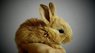 Tavşan Hakkında Genel Bilgiler